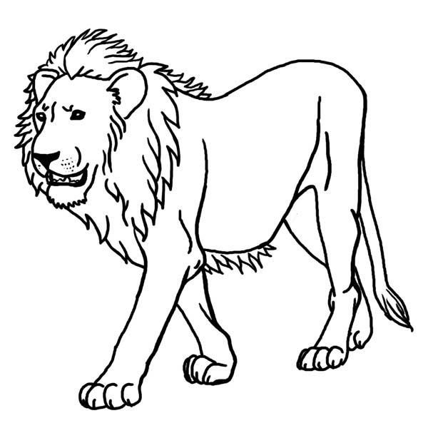 Lion, : Terrifying Lion Wander Around Coloring Page