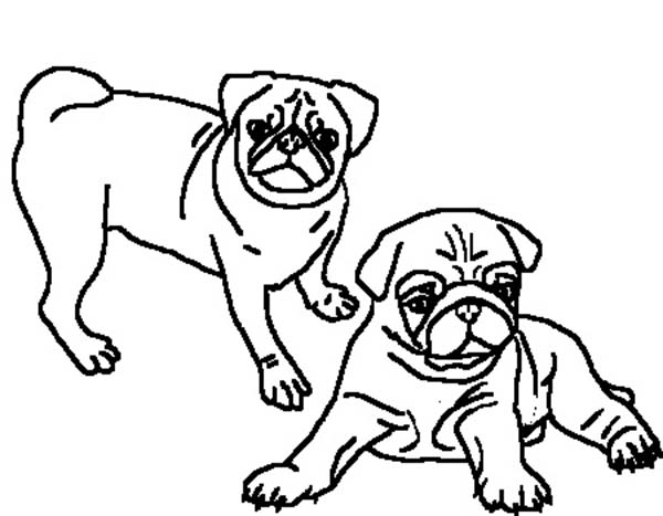 Pug, : Two Beautiful Pug Coloring Page