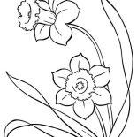 Spring Flower, Two Pretty Spring Flower Coloring Page: Two Pretty Spring Flower Coloring Page