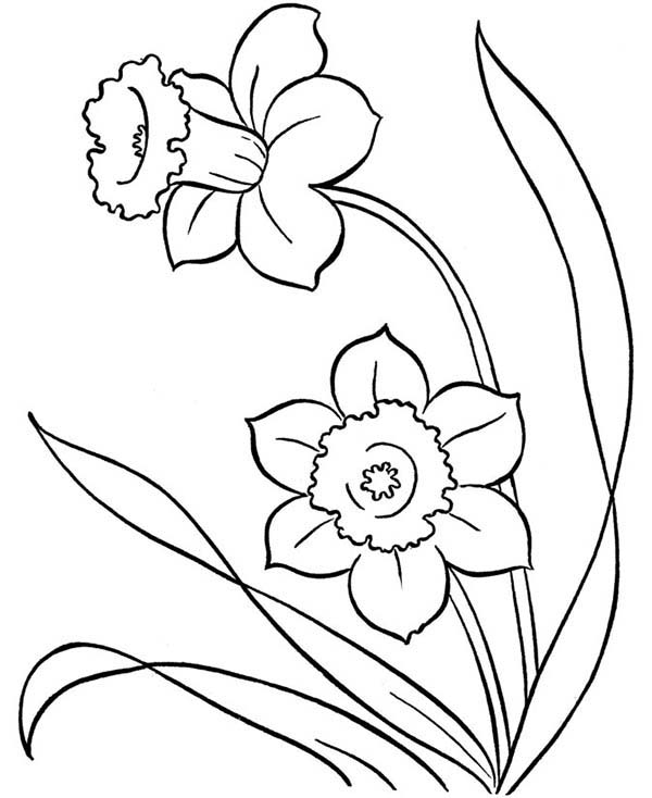 Spring Flower, : Two Pretty Spring Flower Coloring Page