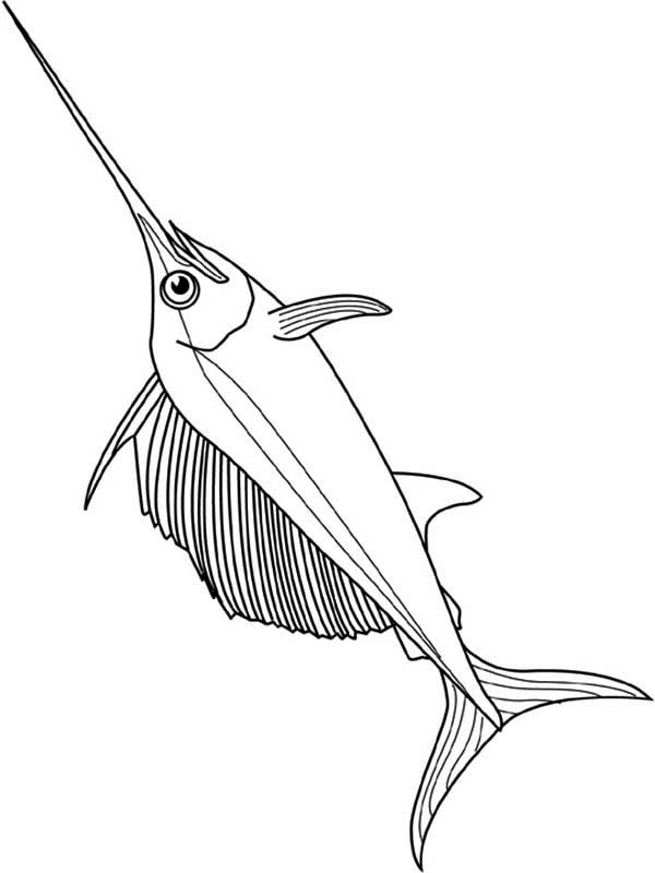 Swordfish, : Very Strong Fish Swordfish Coloring Page