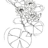 Lily Pad, Water Lily Flowers Among Lily Pad Coloring Page: Water Lily Flowers Among Lily Pad Coloring Page