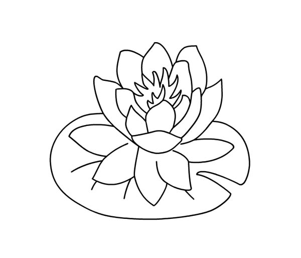 Lily Pad, : Water Lily Over Lily Pad Coloring Page
