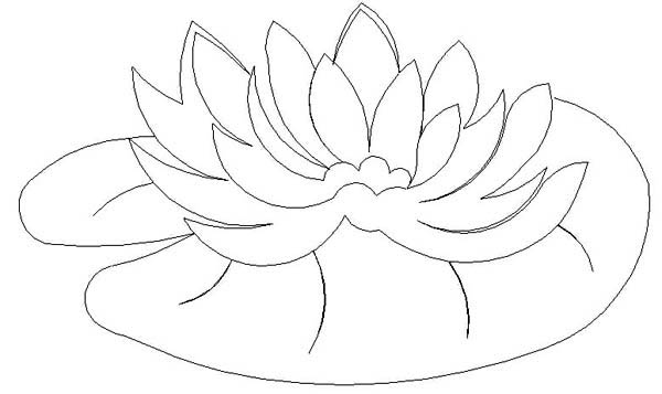 Lily Pad, : Water Lily Pad Coloring Page