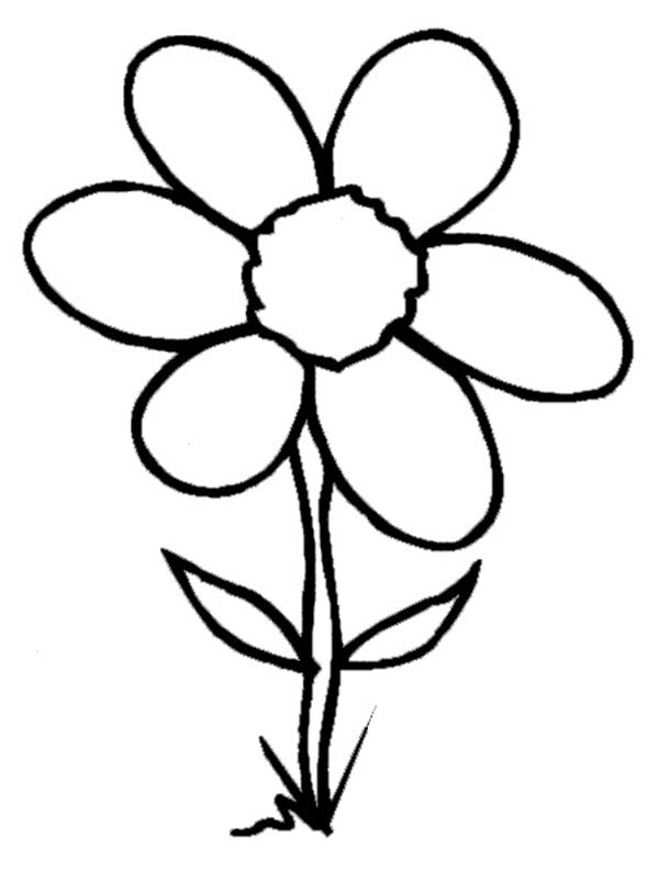 Spring Flower, : Wild Spring Flower is Grow Up Coloring Page