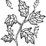 Autumn, Autumn Leaf From Tree Branch Coloring Page: Autumn Leaf from Tree Branch Coloring Page