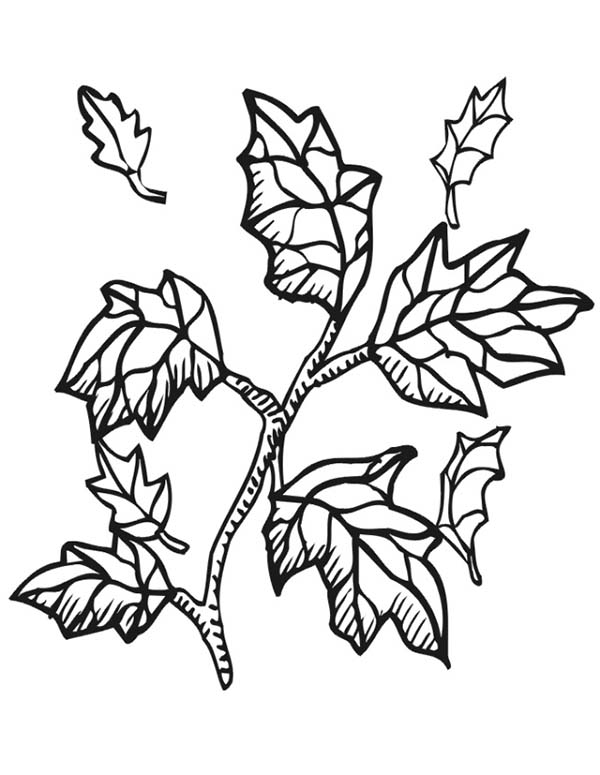 Autumn, : Autumn Leaf from Tree Branch Coloring Page