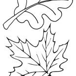 Autumn, Autumn Leaves In Autumn Coloring Page: Autumn Leaves in Autumn Coloring Page