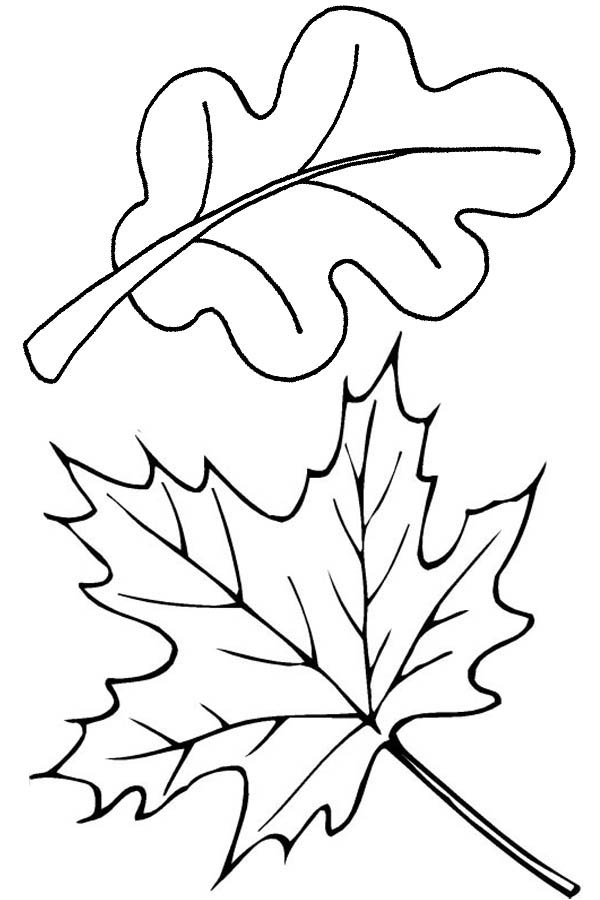 Autumn, : Autumn Leaves in Autumn Coloring Page