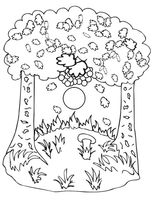 Autumn, : Autumn Trees Coloring Page