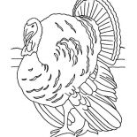 Canada Thanksgiving Day, Realistic Canada Thanksgiving Day Turkey Lineart Coloring Page: Realistic Canada Thanksgiving Day Turkey Lineart Coloring Page
