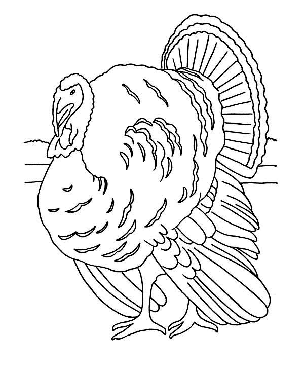 Canada Thanksgiving Day, : Realistic Canada Thanksgiving Day Turkey Lineart Coloring Page