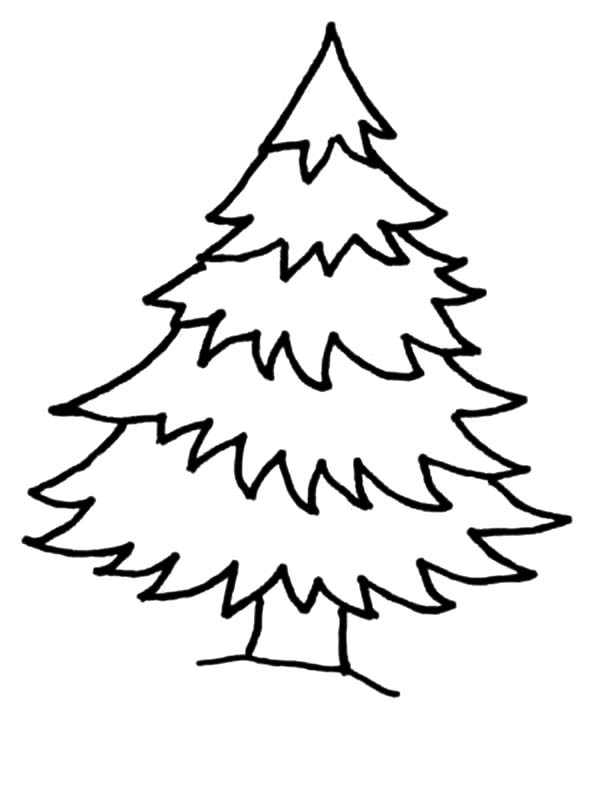 Christmas Trees, : Natural Christmas Trees Coloring Pages