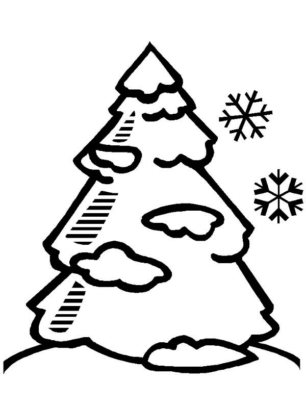 Winter, : Pine Tree Covered with Winter Season Snow Coloring Page