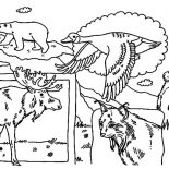 Canada Day, Indigenous Animals On Canada Day 2015 Coloring Pages: Indigenous Animals on Canada Day 2015 Coloring Pages
