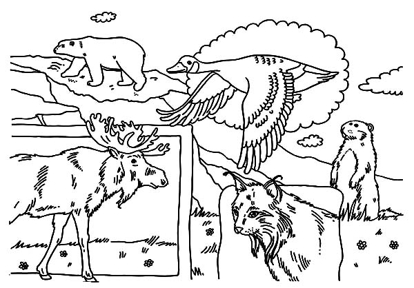Canada Day, : Indigenous Animals on Canada Day 2015 Coloring Pages