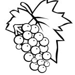 Grapes, 3438 Eps Red Grapes Coloring Page: 3438-eps_red-grapes