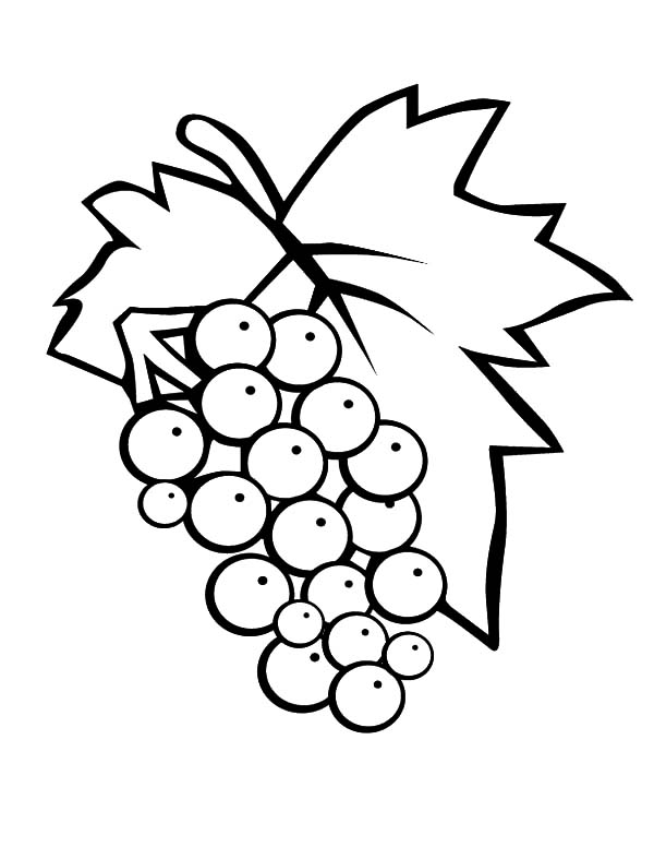 Grapes, : 3438-eps_red-grapes