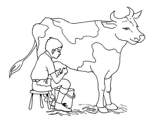 Milking Cow, : A Boy Milking Cow Coloring Pages