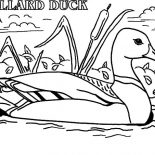 Mallard Duck, Actual Advice Mallard Duck Meme Coloring Pages: Actual Advice Mallard Duck Meme Coloring Pages