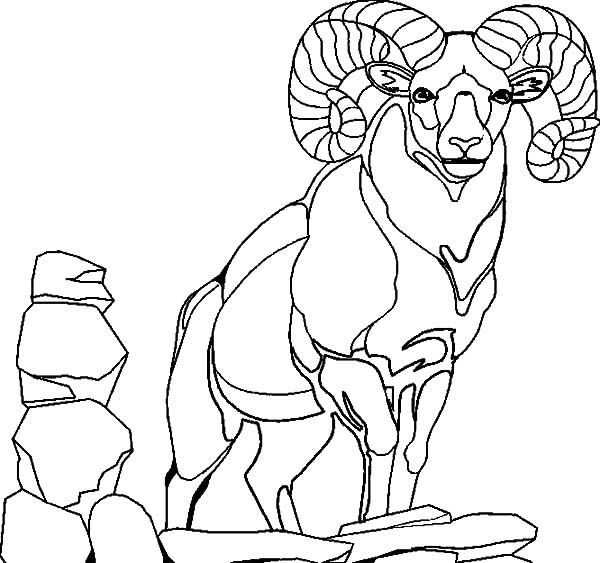 Mountain Goat, : Alpha Male Mountain Goat Coloring Pages