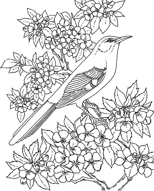 Mockingbird, : Amazing Animal Mockingbird Coloring Pages