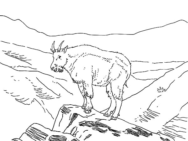 Mountain Goat, : Amazing Animal Mountain Goat Coloring Pages