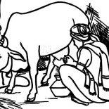Milking Cow, An Indian Farmer Milking Cow Coloring Pages: An Indian Farmer Milking Cow Coloring Pages