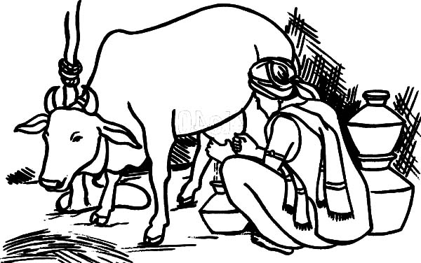Milking Cow, : An Indian Farmer Milking Cow Coloring Pages