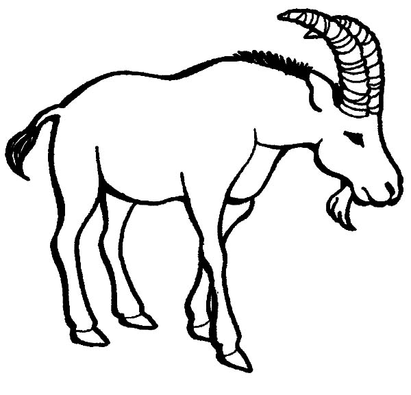 Goat, An Old Goat Coloring Pages: An Old Goat Coloring Pages