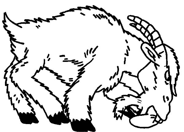 Goat, : Angry Goat Coloring Pages