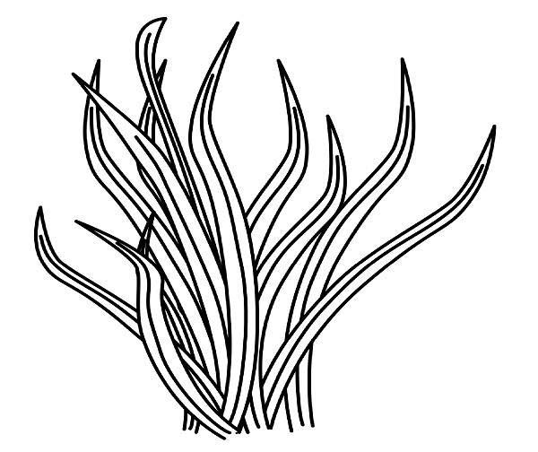 Grass, : Animal Food Grass Coloring Pages