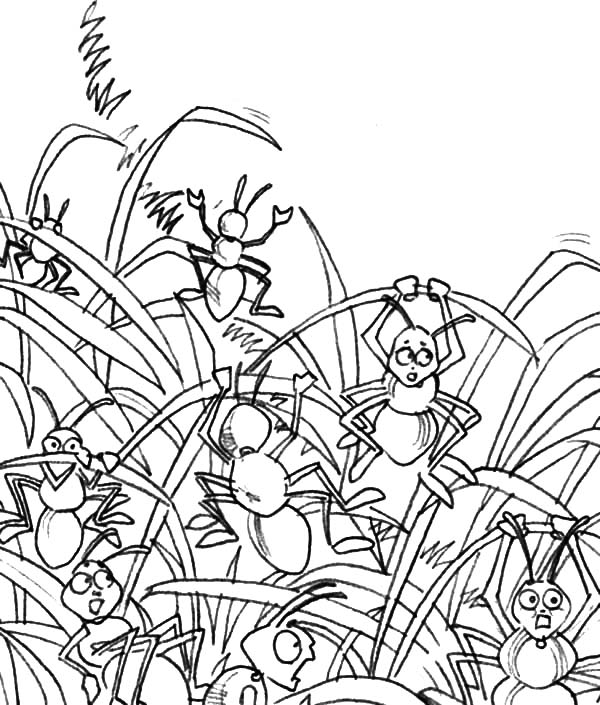 Grass, Ants Party Between Grass Coloring Pages: Ants Party Between Grass Coloring Pages