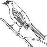 Mockingbird, Bahama Mockingbird Coloring Pages: Bahama Mockingbird Coloring Pages