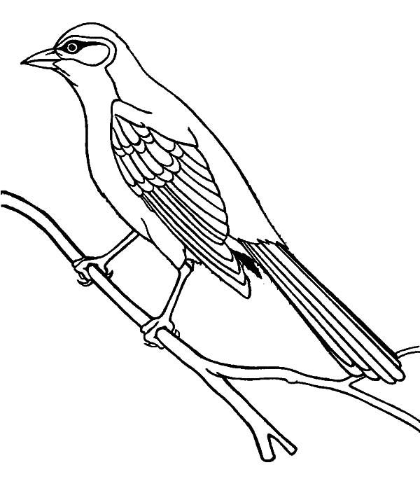 Mockingbird, : Bahama Mockingbird Coloring Pages