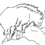 Mountain Goat, Band Leader Mountain Goat Coloring Pages: Band Leader Mountain Goat Coloring Pages