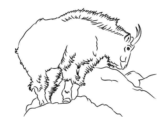 Mountain Goat, : Band Leader Mountain Goat Coloring Pages