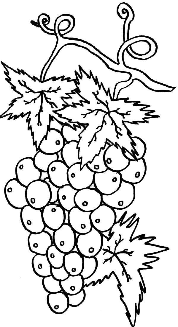 Grapes, : Best Grapes for Wine Coloring Pages