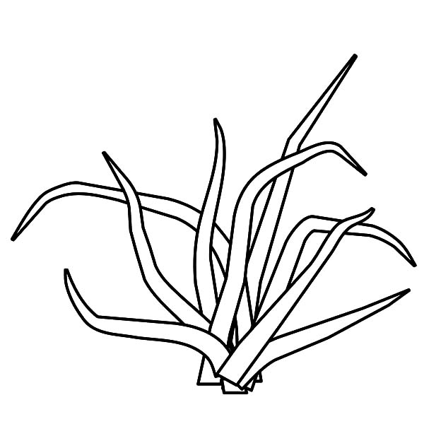 Grass, : Broken Grass Coloring Pages