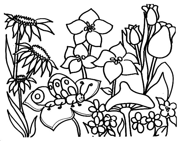 Garden, : Butterfly in Beautiful Garden Coloring Pages