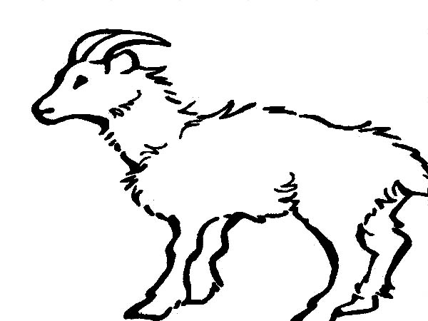 Mountain Goat, : Cautious Mountain Goat Coloring Pages