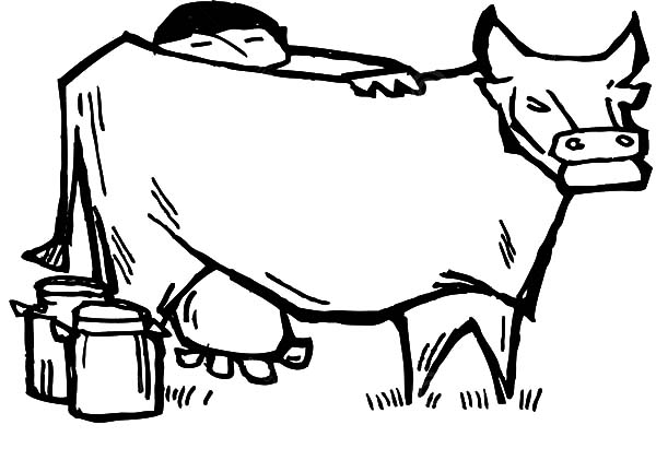 Milking Cow, : Chinese Farmer Milking Cow Coloring Pages