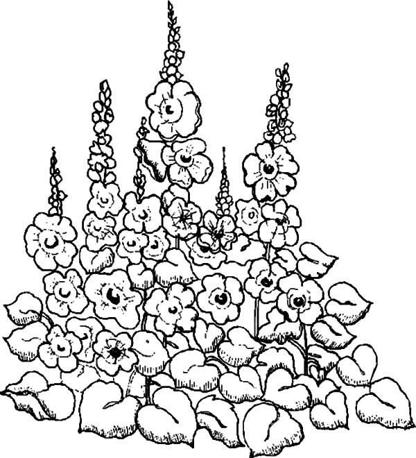 Garden, : Drawing Garden of Flower Coloring Pages