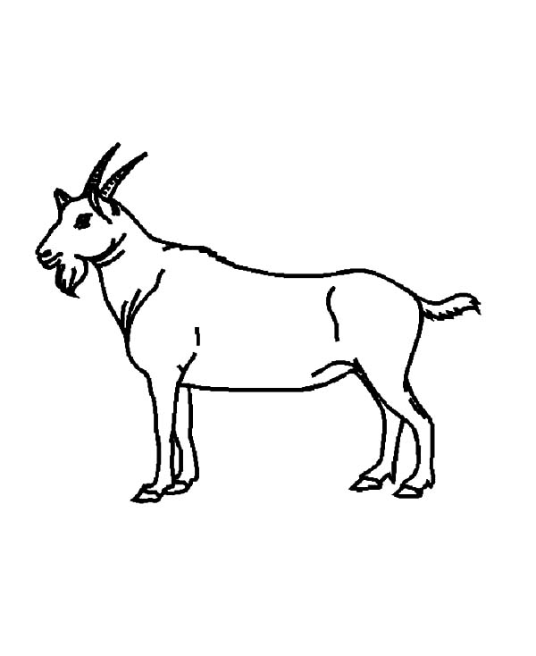 Goat, : Drawing Goat Coloring Pages