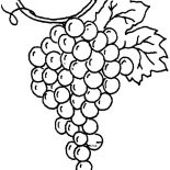 Grapes, Drawing Grapes Coloring Pages: Drawing Grapes Coloring Pages