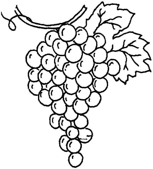 Grapes, : Drawing Grapes Coloring Pages