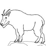 Mountain Goat, Drawing Mountain Goat Coloring Pages: Drawing Mountain Goat Coloring Pages