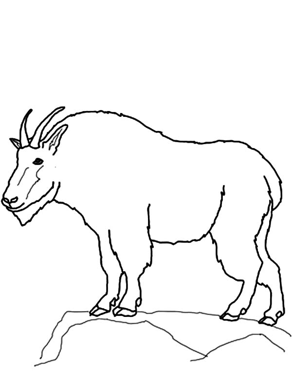 Mountain Goat, : Drawing Mountain Goat Coloring Pages