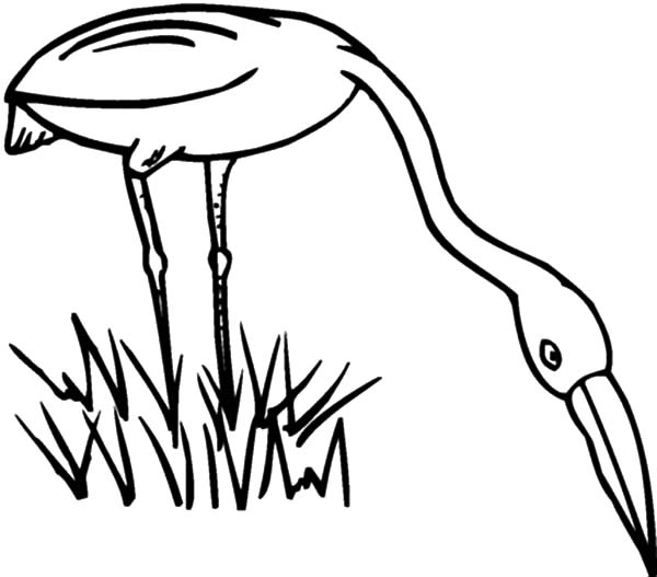 Grass, Egret Eating Grass Coloring Pages: Egret Eating Grass Coloring Pages