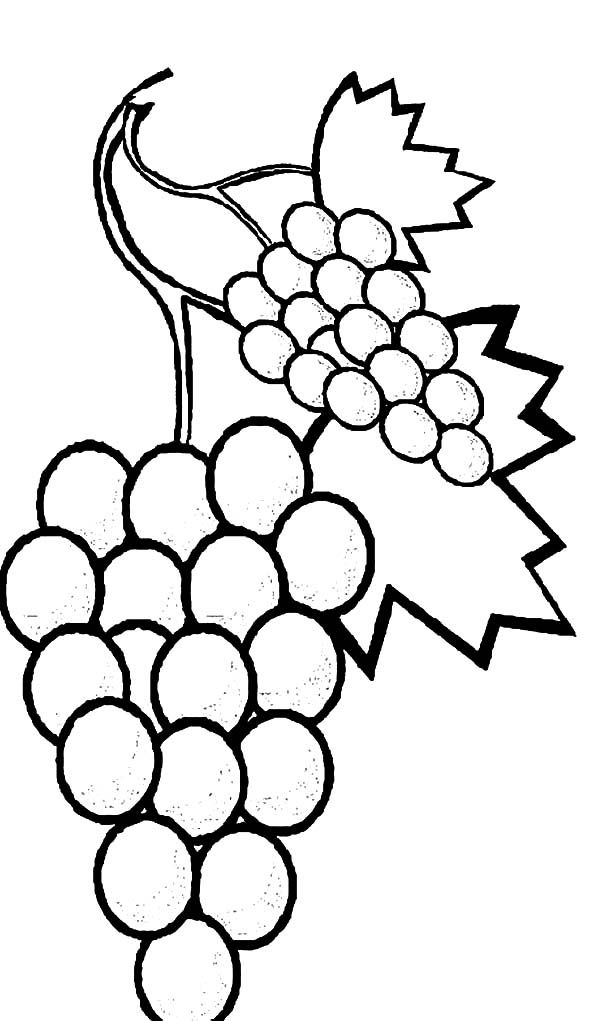 Grapes, : Favorite Fruits Sweet Grapes Coloring Pages